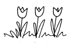 black and white sketch of tulips