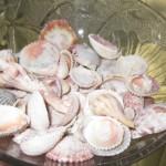a bowl of sea shells