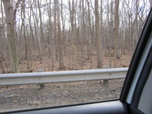 driving by trees