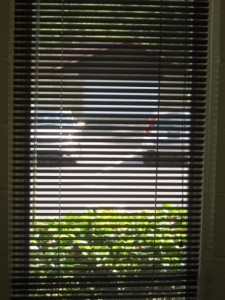 Looking out  the Venetian blinds