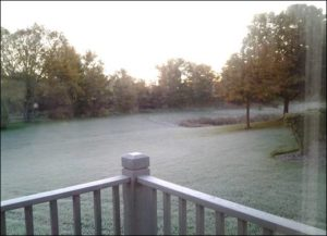 frost on florida grass
