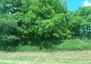 Kentucky trees