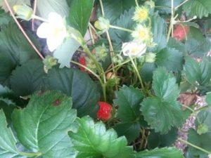 Plant photo taken  the beginning of September